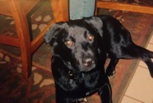 Wilbur  May 2003-December 2012